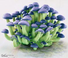 Magic Mushrooms - Worth1000 Contests