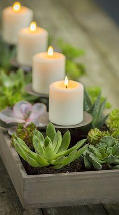candles and succulents planter....