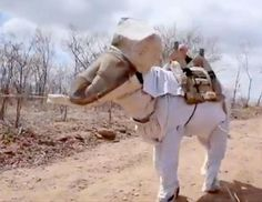 """""""According to the Brazilian news outlet, Jornal da Besta Fubana, beekeeper Manuel Juraci outfitted his donkey Boneco in a custom-made beekeeping suit to protect him from getting stung while the two harvested honey in Itatira, a rural town in Brazil."""" [Currently photo 9 of 98.]"""