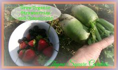 TSG: Environment for Growing Organic Strawberries