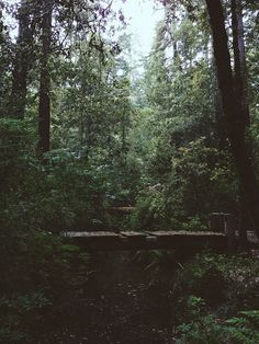 Mostly nature, forests, music, landscape. Into The Woods, Beautiful World, Beautiful Places, Big Basin Redwoods, Nature Landscape, Adventure Aesthetic, The Great Outdoors, Wonders Of The World, Mother Nature