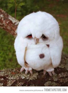 ADORABLE sad owl.