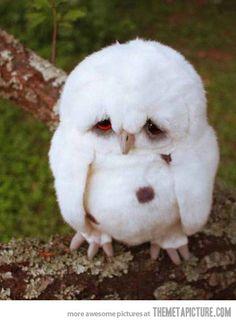 I am not an angry bird, I am a sad bird…
