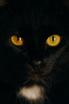 a cat by Artem Dunkel, via 500px