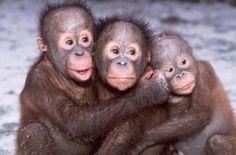 Image result for Monkeys Hugging