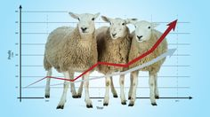The Sheep and the Wolves: Smart Investing Made Simple