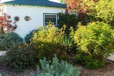 Garden 11 in Culver City   Theodore Payne Native Plant Garden Tour