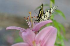 Featured on Groovy Butterflies! http://fineartamerica.com/groups/groovy-butterflies.html?tab=overview