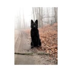 Wicked Training Your German Shepherd Dog Ideas. Mind Blowing Training Your German Shepherd Dog Ideas. Animals And Pets, Funny Animals, Cute Animals, Beautiful Dogs, Animals Beautiful, I Love Dogs, Cute Dogs, Tier Wolf, German Shepherd Puppies