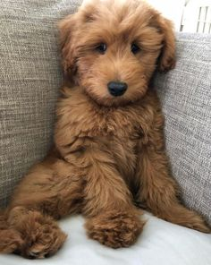 Best Dog Breeds: The Top 20 List - - Best Dog Breeds: The Top 20 List Cute Puppies & Dogs Does it get any cuter than this? What is your favorite dog breed? Cute Dogs And Puppies, Little Puppies, Baby Dogs, Pet Dogs, Doggies, Dog Cat, Funny Puppies, Cute Baby Animals, Animals And Pets