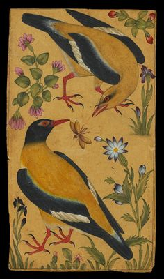 Two Orioles, Mughal, North India, c. 1610. This composition is closely related to European botanical and natural history studies which had begun to reach the Mughal court by the late 16th century. The upper bird is a male Indian Golden Oriole (Oriolus kundoo),