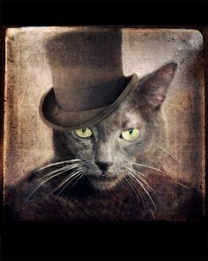 Portrait Photography Gray Cat Photo Russian Blue by TheLonelyPixel, $30.00