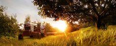 Google Afbeeldingen resultaat voor http://blog.ilusix.nl/wp-content/uploads/2010/06/landschap-fotografie-andrew-brooks.jpg