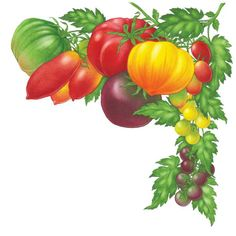Tomatoes - Tomates