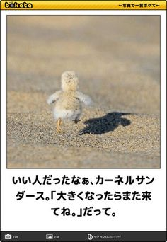 I have no idea what the caption says but i do know adorable when i see it! look at those tiny steps captured just in time! Cute Animals Images, Cute Funny Animals, Cute Baby Animals, Funny Cute, Animals And Pets, Hilarious, Try Not To Laugh, Make You Smile, Funny Images