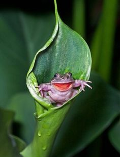 Surprise, I'm a toad! -
