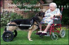 Eddie's Wheels for Pets's photo: