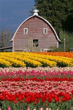 country living..flower farm