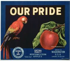 OUR PRIDE Vintage Apple Crate Label(parrot)