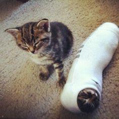 """""""I don't want to playTutankhamun's Mummy anymore… Is boring…""""  Photo viathug-cat"""