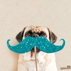 Photo props, maybe? Animals And Pets, Baby Animals, Cute Animals, Pet Dogs, Dogs And Puppies, Dog Rules, Pug Love, Photo Booth Props, Dog Photos