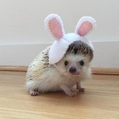 Cute Creatures, Beautiful Creatures, O Castor, Animals And Pets, Funny Animals, Animal Pictures, Cute Pictures, Baby Hedgehog, Cute Piggies