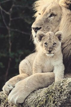PINTEREST: @kingalphas INSTA: @manucooperpriv Cats And Kittens, Big Cats, Cute Cats, Baby Animals, Animals And Pets, Cute Animals, Beautiful Creatures, Animals Beautiful, Grand Chat