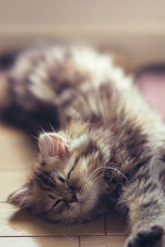 When it comes to cats we all know that our feline friends absolutely love to snooze nap and siesta their way through the day so lets dig a little deeper into the meanings behind cat sleeping patterns positions and behaviors. Cute Kittens, Cats And Kittens, Ragdoll Kittens, Tabby Cats, Bengal Cats, Pretty Cats, Beautiful Cats, Animals Beautiful, Pretty Kitty