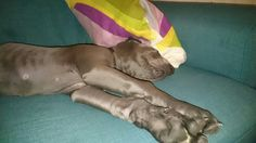 Post 1st puppy party Puppy Party, Puppies, Boys, Animals, Baby Boys, Animales, Puppys, Kids, Animaux