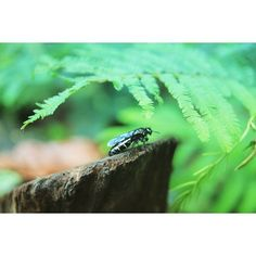 【permatajkt】さんのInstagramをピンしています。 《I tried to hide myself yet you can find me homans😍  #insects #photography #green #woods #photos #canon #canonphotography #tamron #tamronlens #naturephotography #beautiful #photograph #photooftheday #instadaily #instalike #instamood #instapic #canonglobal #travel #hiking #trekking #mountains #refreshed #trees #fotograferindonesia #昆虫 #自然 #森林 #写真 #写真家》