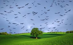Montagens - Pássaros no céu