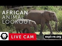 African Animals webcam - Live video of from Africa | Explore.org - Live Cams - explore