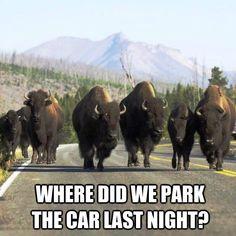 Where did we park the car last night?