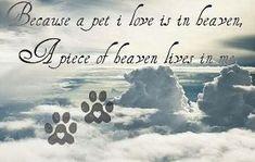 Pet Loss Prayer | Go Back > Pix For > Poem For Dogs In Heaven