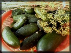 Appetizer Recipes, Appetizers, Thing 1, Pickles, Cucumber, Vegetables, Canning, Salads, Pickle