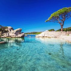 Pine Tree And Beautiful Lagoon On Palombaggia Beach, Corsica, France Stock Image - Image of picturesque, europe: 79265353 Corsica, Bora Bora, Mykonos, Travel Deals, Travel Guide, Last Minute Vacation Deals, Eze France, Strand Camping, Popular Holiday Destinations