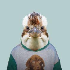 Zoo portraits by Yago Partal, Kookaburras