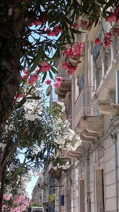~Siracusa, Italy ~ gorgeous oleander trees~