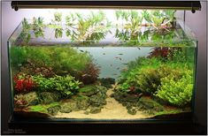 Planted Tank Valley of colors by Caileanu Alexandru – Aquarium Design Contest Aquascaping, Aquarium Aquascape, Planted Aquarium, Nature Aquarium, Aquarium Fish Tank, Fish Tanks, Aquarium Garden, Aquarium Landscape, Aquarium Design
