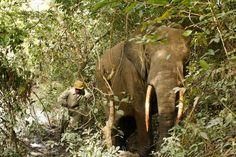 Garamba National Park, Dem. Rep. of the Congo