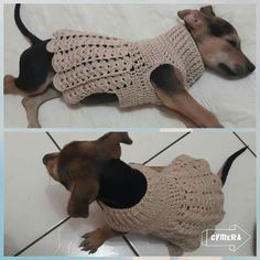 Crochet Dog Clothes, Girl Dog Clothes, Puppy Clothes, Crochet Dog Patterns, Dog Crochet, Crochet Dog Sweater, Chugs, Dog Sweaters, Dog Dresses