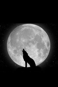 iphone wallpaper pics | one wolf howling at a full moon during the dark night