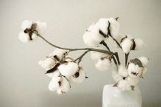 cotton - unexpectedly pretty and simple arrangement Neutral, Shades Of White, Interior Exterior, Wedding Trends, Wedding Ideas, Boho, Beautiful Flowers, Romantic Flowers, Planting Flowers