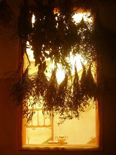 """Hanging herbs ~""""An art we must all rediscover ~ and Practice!!!!"""""""