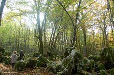 Découvrez l'univers envoûtant du sentier des Malrochers : Grottes, doline labyrinthes, ...   Jura, France  #Jura #JuraTourisme #Poligny