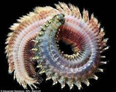 earth monster worms - Bing images