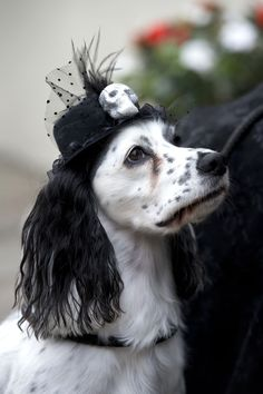 Whitby goth weekend – in pictures