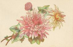 Pastel chrysanthemums, pink and yellow, with ivy.