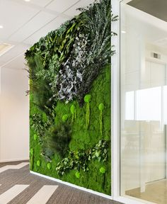 A beautiful real plant wall is no longer a dream. Find and design the most beautiful indoor plant wall and frames and give your spaces a true nature inspired experience! Real Plants, Exotic Plants, Types Of Plants, Indoor Plant Wall, Indoor Plants, Vertikal Garden, Real Nature, True Nature, Moss Plant