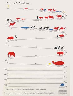 How Long Do Animals Live? infographic by Otto Neurath (30s)